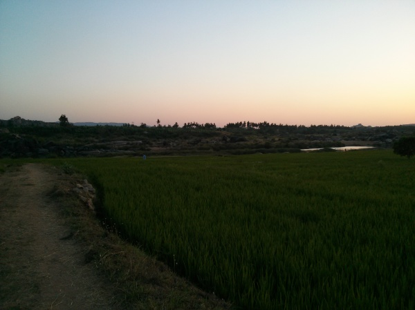 Through the paddy field...